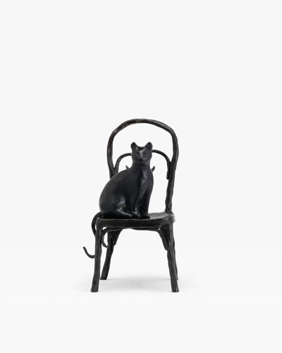 Cat on a Chair 2016